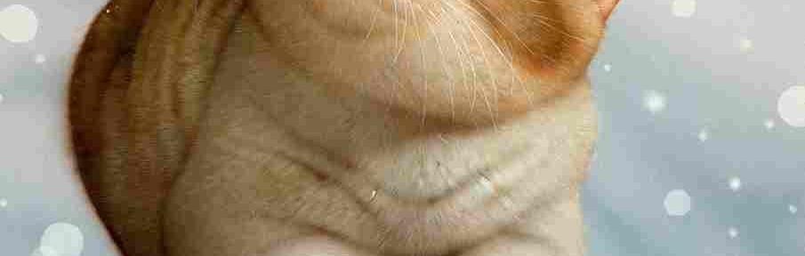 Без кота и жизнь не та: милейшие кошки Макото Мурамацу