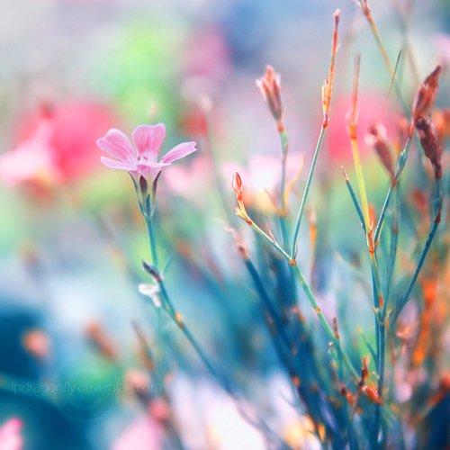 Тонкая красота от lpdragonfly