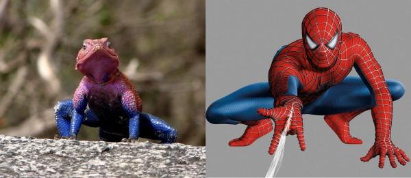 Родственник Человека-паука?