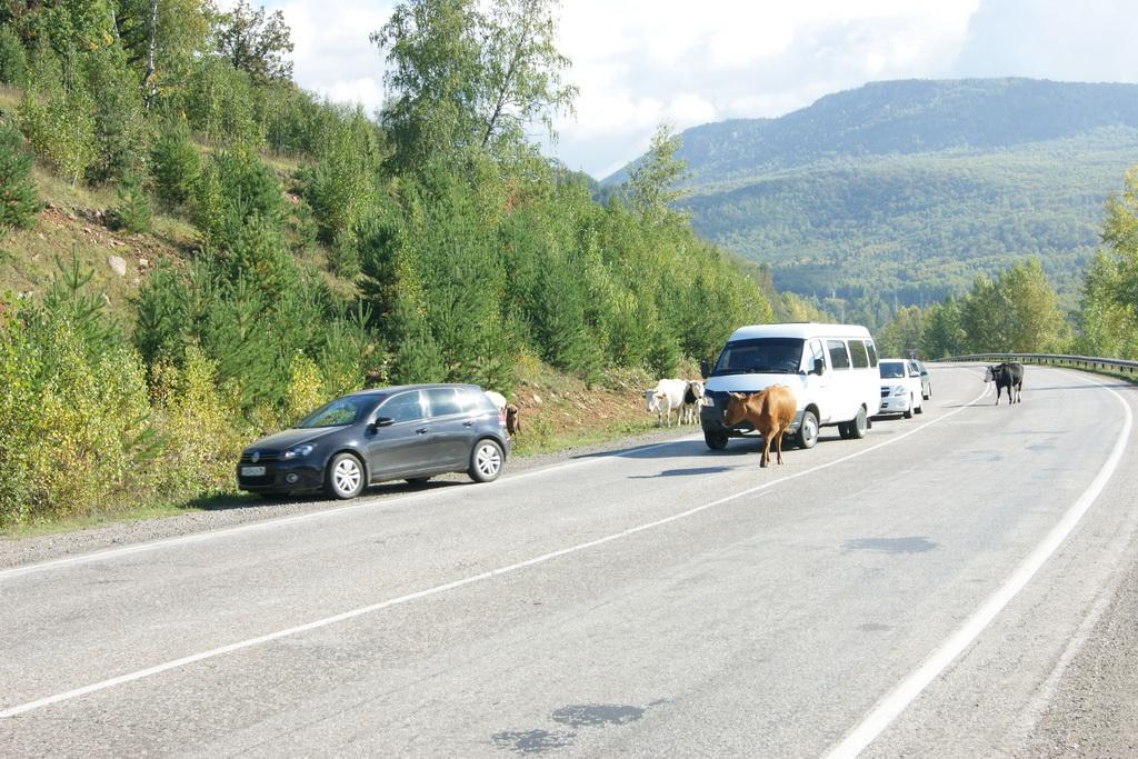 Животные на дороге - главные