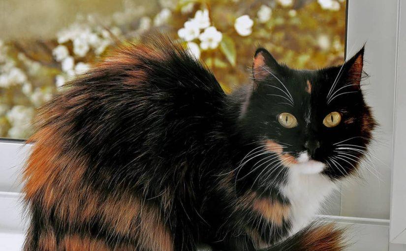 Про кошку Милу
