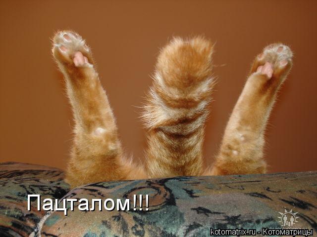 Из жизни кошек :) (взяла истории с разных сайтов)
