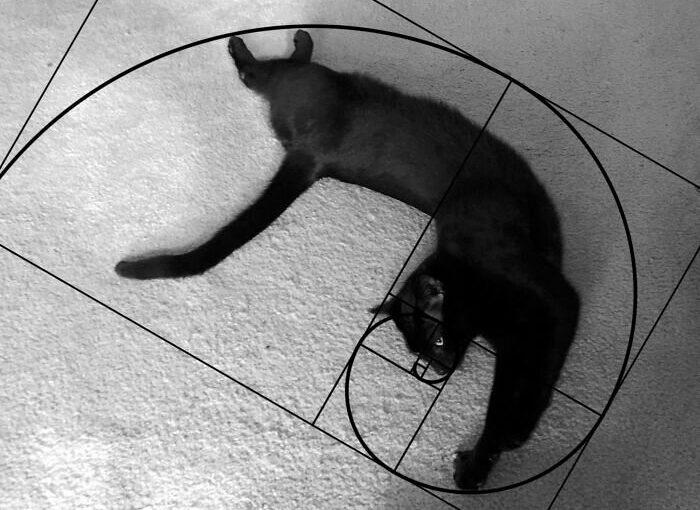 Тайна котиков раскрыта!