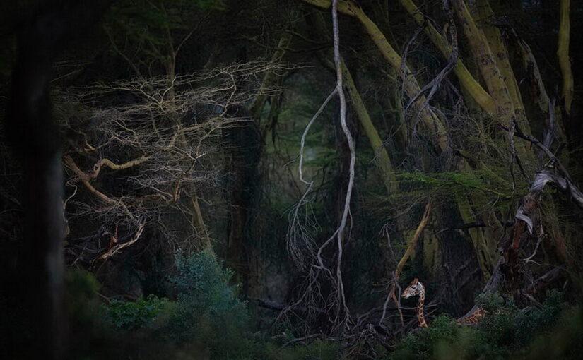 Остановись, мгновенье! Как были сделаны лучшие 10 фотографий природы по итогам конкурса Nature Photographer of the Year – 2020
